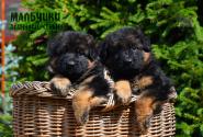 03_Puppies_Yamaguchi_Ilza_BOYS_LH