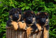 06_Puppies_Yamaguchi_Ilza_BOYS
