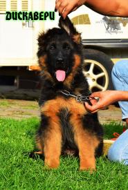 21_Puppies_Yamaguchi_Ilza_DISKAVERI