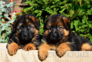 12_Puppies_Garry_Proza_GIRLS