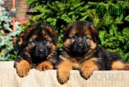 13_Puppies_Garry_Proza_GIRLS