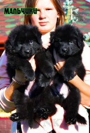 14_Puppies_Garry_Proza_BOYS_BL