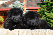 16_Puppies_Garry_Proza_BOYS_BL