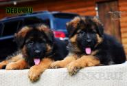 19_Puppies_Garry_Proza_GIRLS