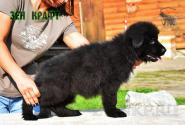 20_Puppies_Garry_Proza_ZEN-KRAFT_BL