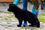 22_Puppies_Garry_Proza_ZEN-KRAFT_BL
