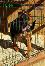 41_Puppies_Fogart_iTroya_GERCZOGINYA