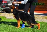 16_Puppies_Tamerlan_Elisabet_IMPERATOR